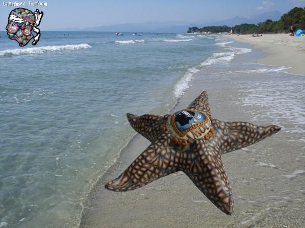 étoile de mer vue à Pinia plage de Ghisonaccia